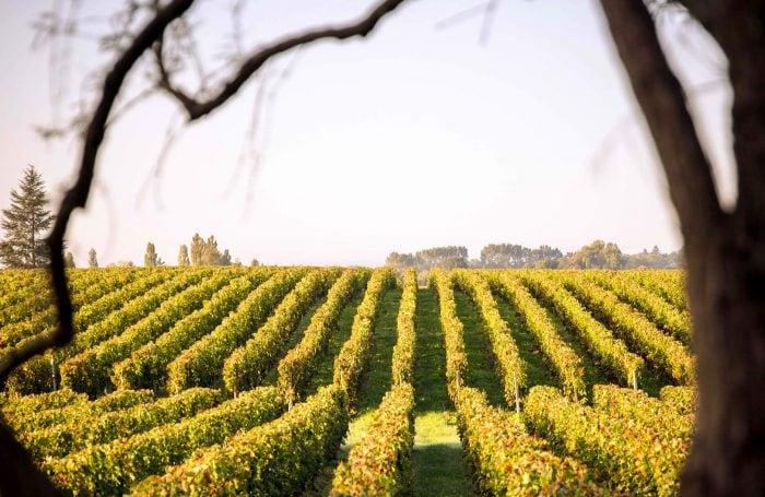 Domaine Chateau Malmaison vignes